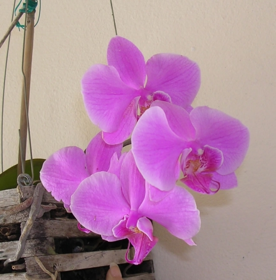 The Orchid Garden Picture